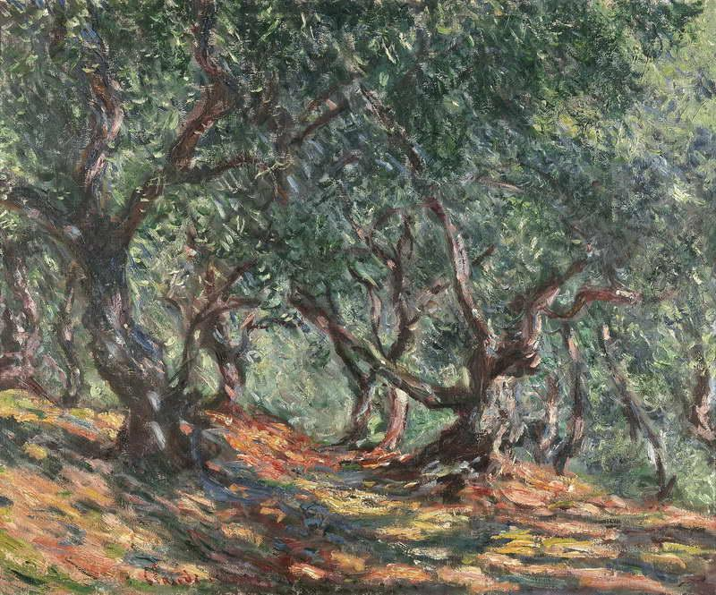 Olive Trees in Bordighera, 1884