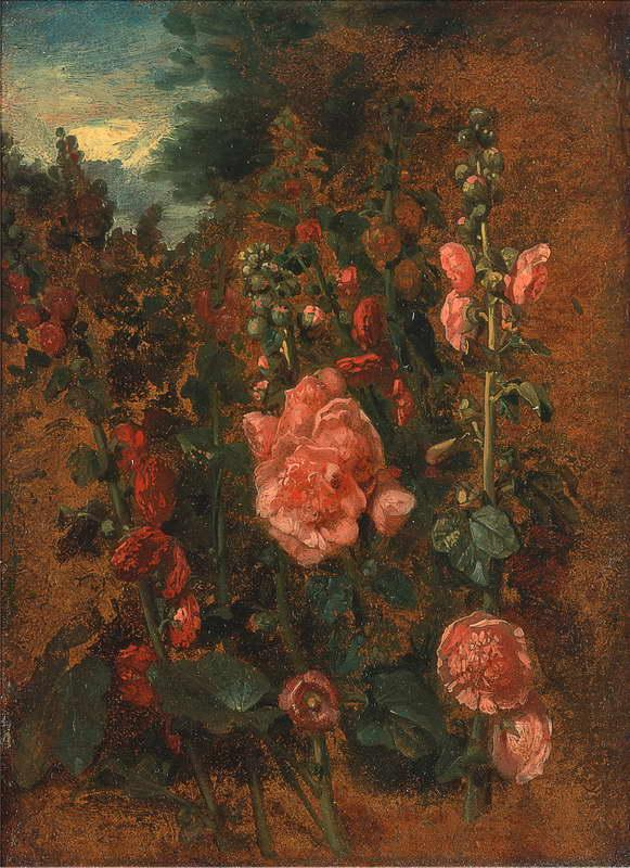 Estudio de Hollyhocks