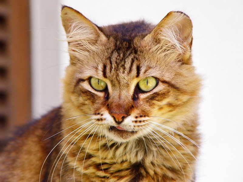 Cuadro en lienzo con bastidor gato inquisitivo - Cuidados gato 1 mes ...