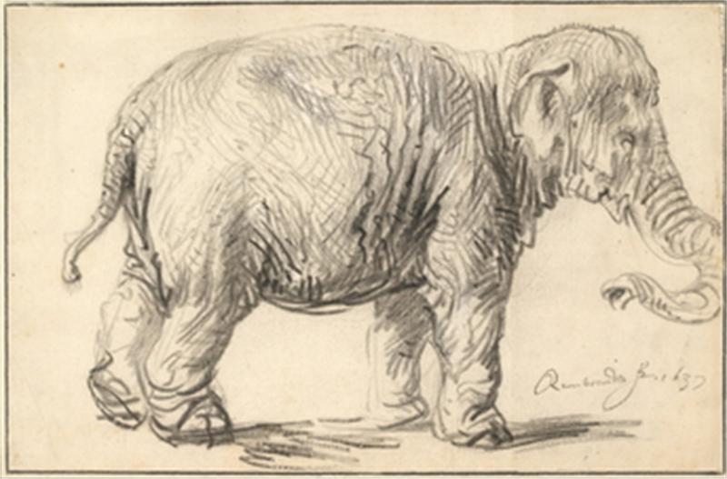Obra de Arte - Un elefante, 1637 - Rembrandt Harmenszoon van Rijn